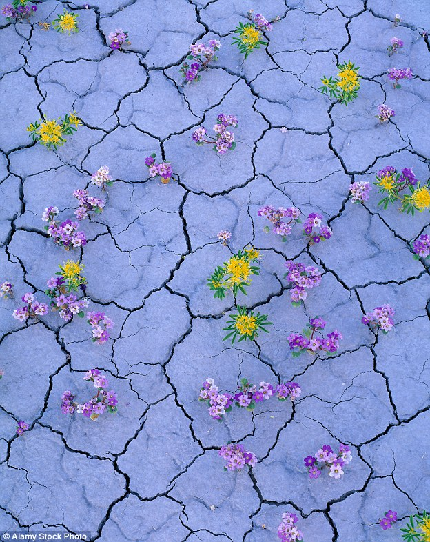 Flowers-in-Desert